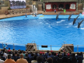 Dolphins' dance at Ushak Sea World