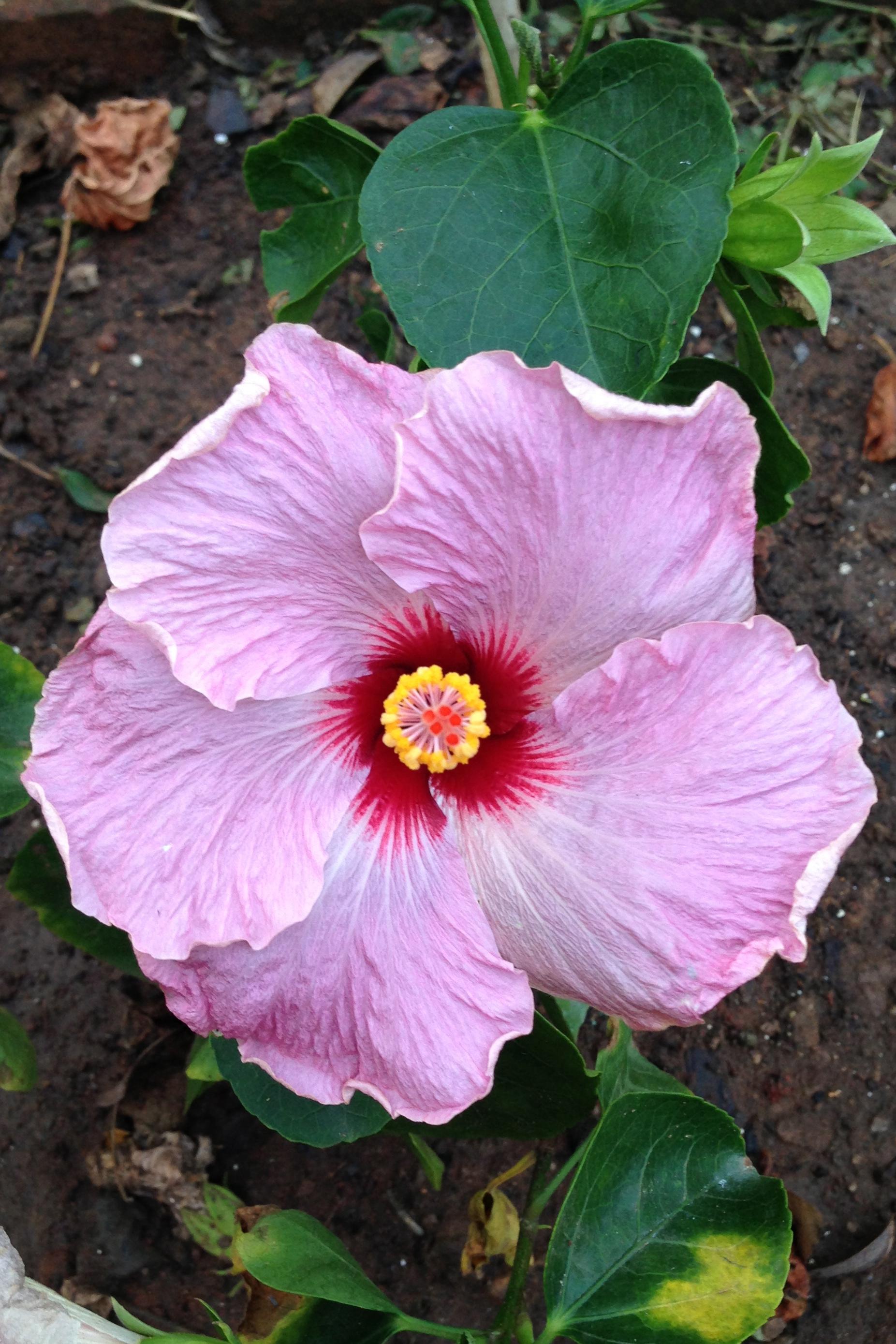 Welcome back vedanta in practice hibiscus izmirmasajfo